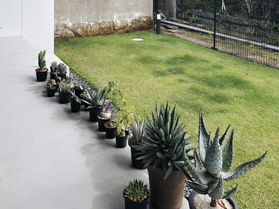 八幡の家 多肉植物
